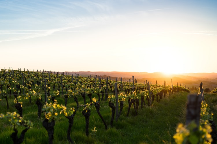 Tracing The Ancient History Of Wine