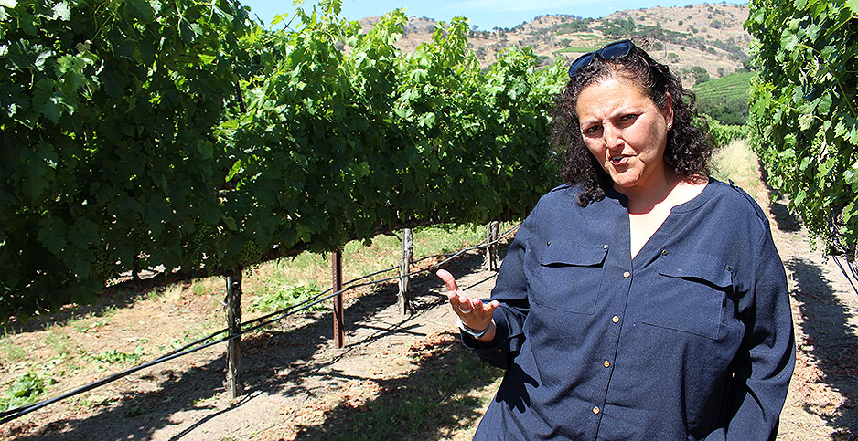 Agriculture: Next Climate Challenge: Getting The Smoky Taste Out Of Wine photo