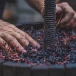 Tracing The Ancient History Of Wine photo
