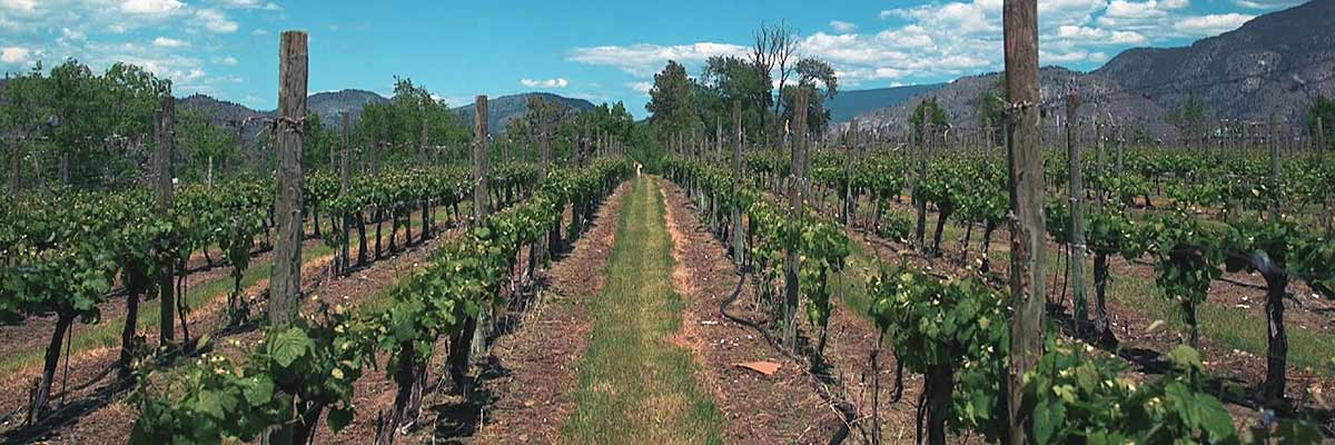 South Okanagan Wineries Soar At National Competition photo