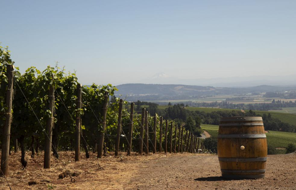 Grapes Of Change: How The Wine Industry Has Transformed Oregon?s Economy photo