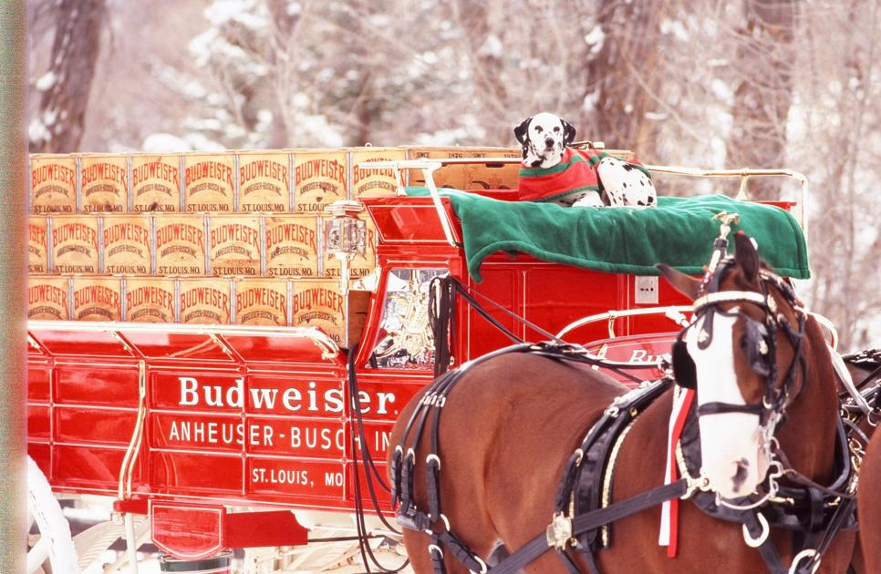 Budweiser Clydesdales Coming To Bg During Bgsu Homecoming photo