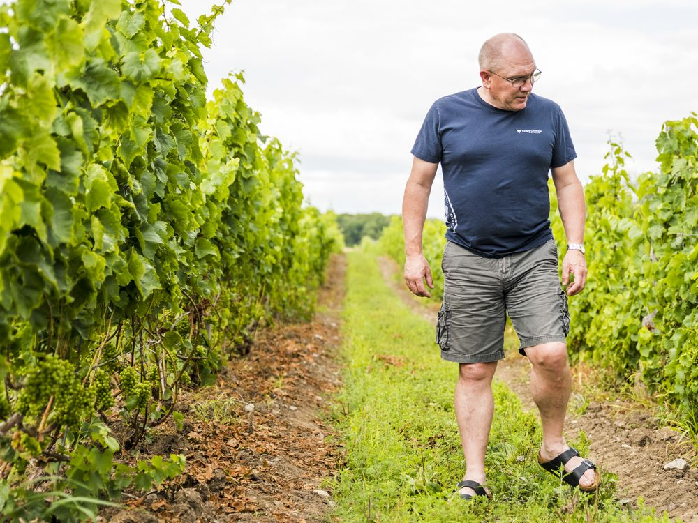Province Loosens Squeeze On Winemakers photo