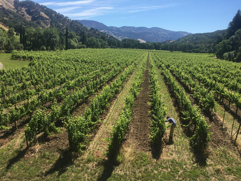 Bonterra Digs In, Reduces Carbon With Regenerative Farming photo