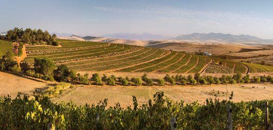 Tim James: Three Swartland Winefarms photo