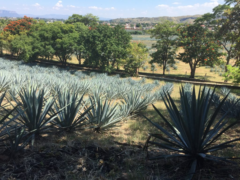 Try Some High-quality Tequila Splendido's Pairing Dinner This Friday photo