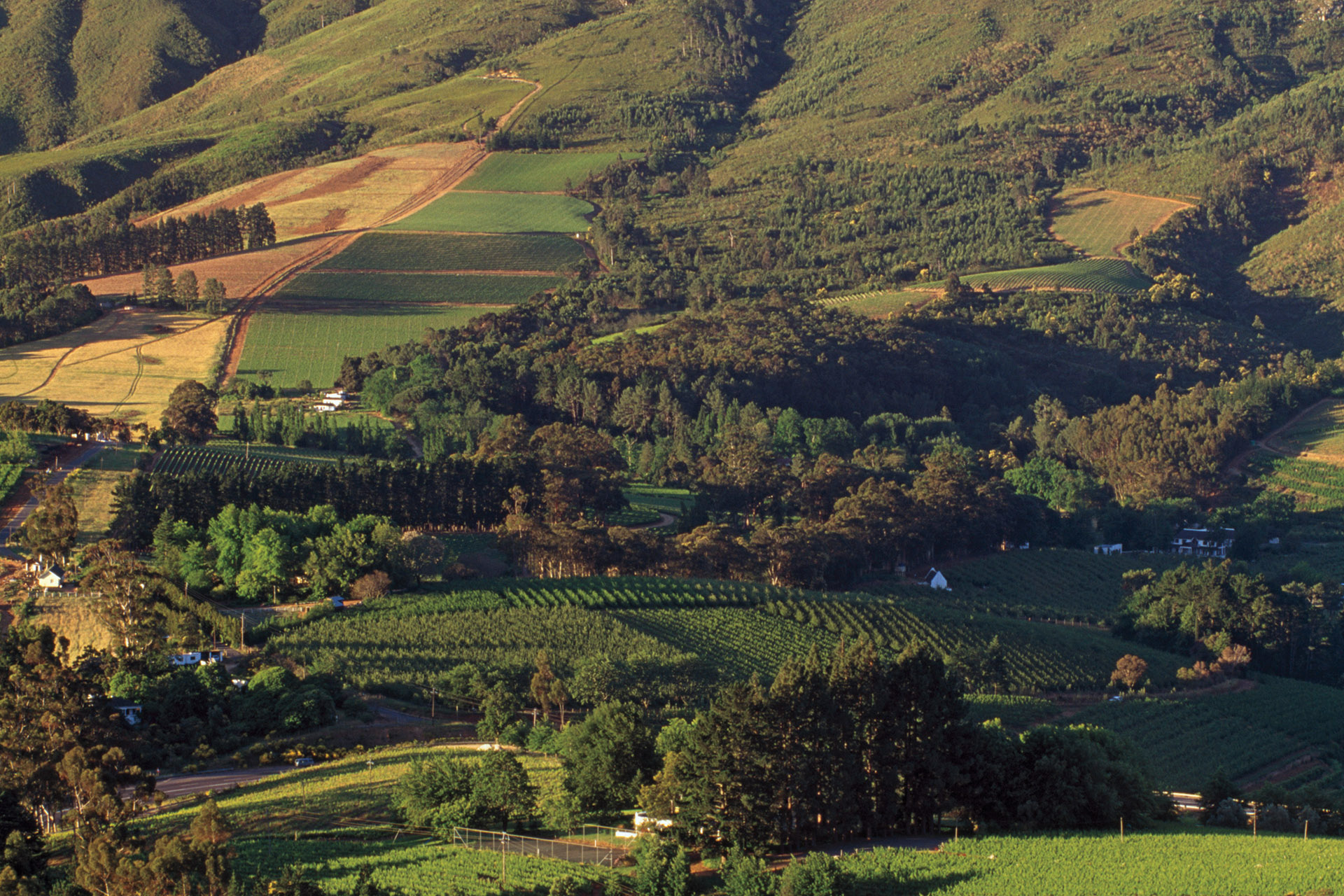 Why Your Next Cabernet Sauvignon Should Be From South Africa photo