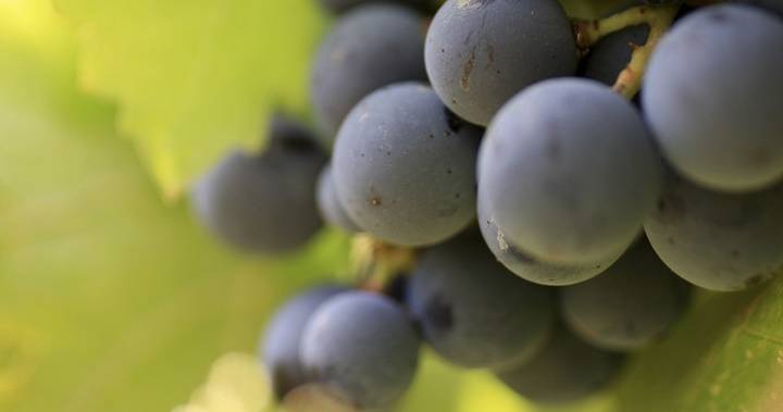 B.c. Wineries Mission Hill, Moon Curser Take Top Spots At National Awards photo