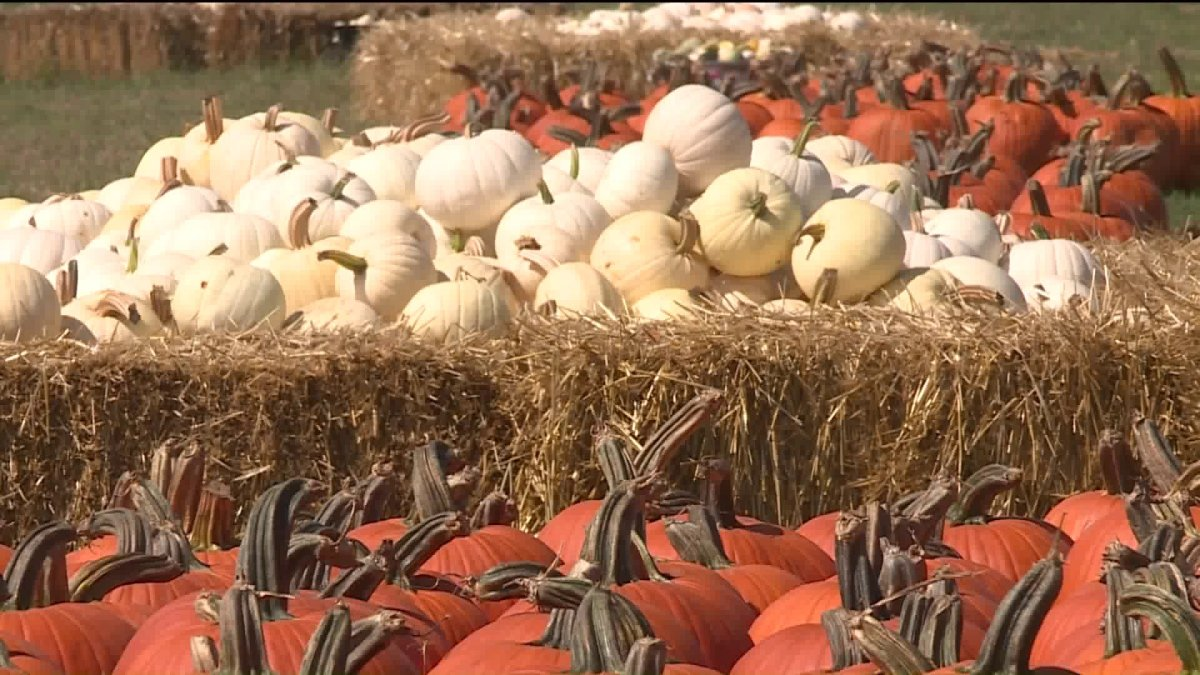 Ideal Fall Weather For Winegrowers, Pumpkin Farmers After Excessive Rain Early Summer photo