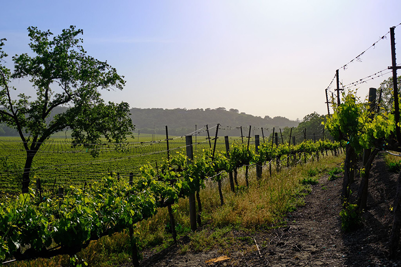 Travel Guide To Sonoma, The World?s First 100% Sustainable Wine Region photo