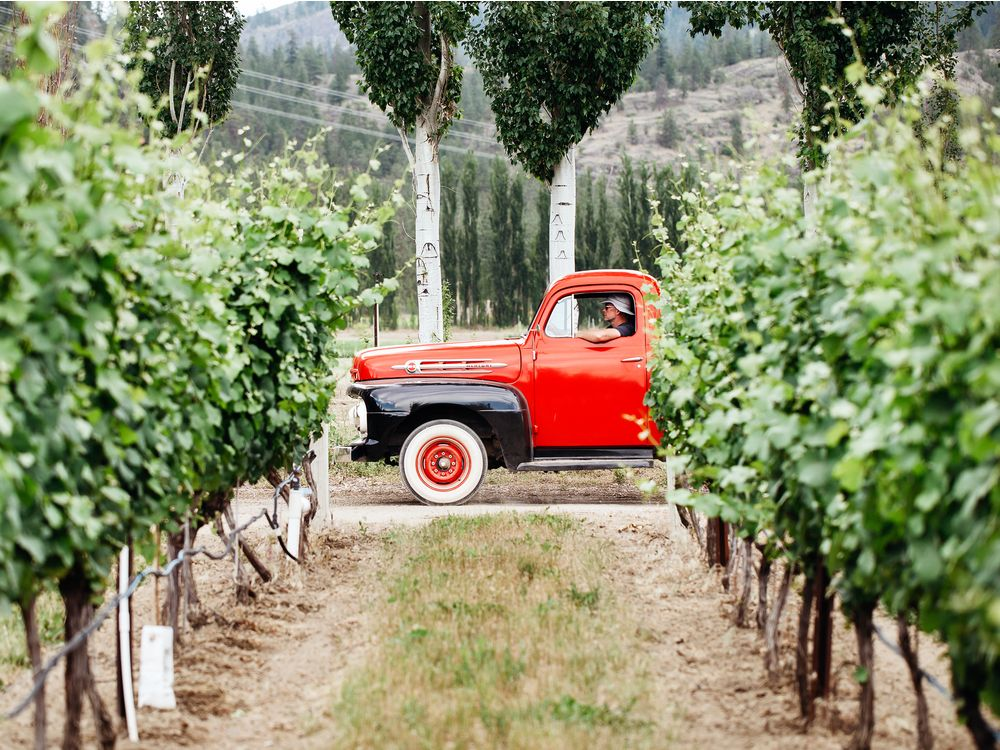 Oliver Is Home To Half Of B.c.'s Wine Grapes, And A Growing Number Of Albertans photo