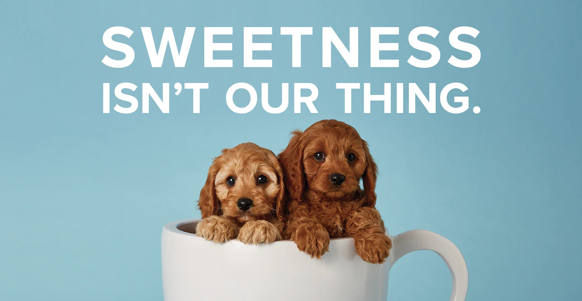 Almond Breeze Uses Puppies And Kittens To State 'sweetness Isn't Our Thing' In Ads For Its Barista Blend photo