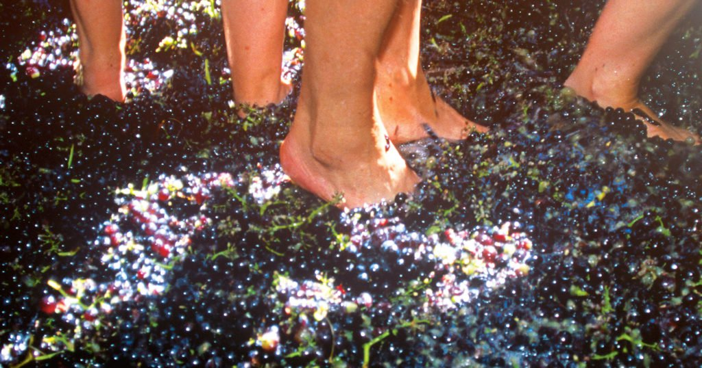 Stomp Grapes At These 3 Fun Wine Festivals Near Dc photo
