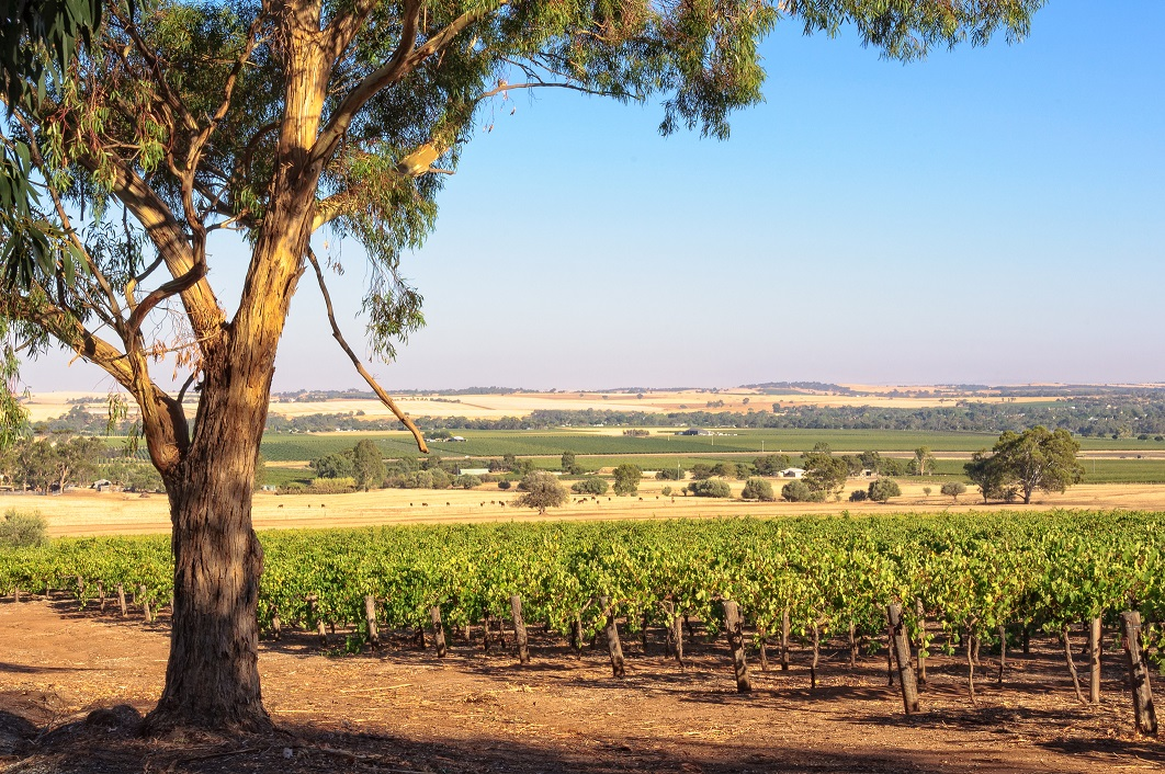Rampant China Growth Fuels Expansion In The Barossa photo