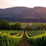 More Quality Wines from South Africa Enter the Global Market photo