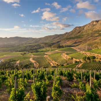 Tim Atkin Mw: South Africa?s Wine Industry Needs To Premiumise photo