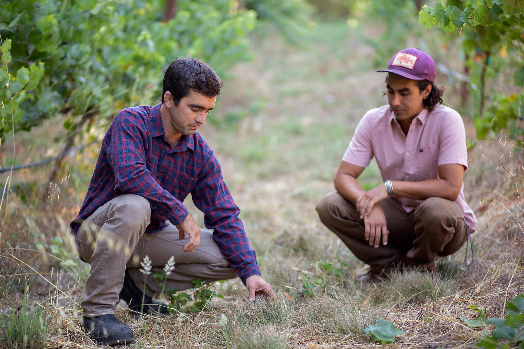 The Young Natural Wine Mavericks Of Santa Cruz photo