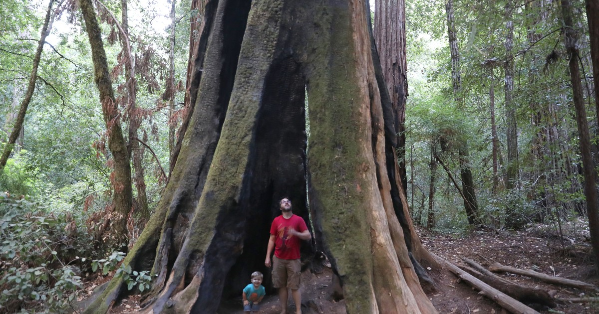 Walk Among The Redwoods On A Weekend Trip To The Santa Cruz Mountains photo