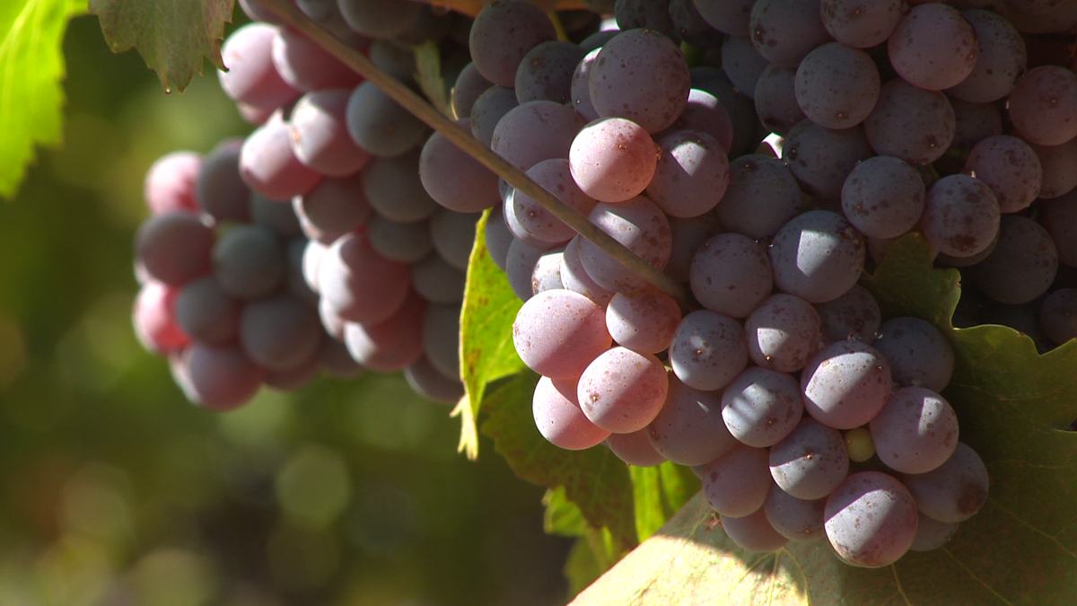 Cheers! Apple Hill Boasts A Unique Wine Tasting Adventure photo