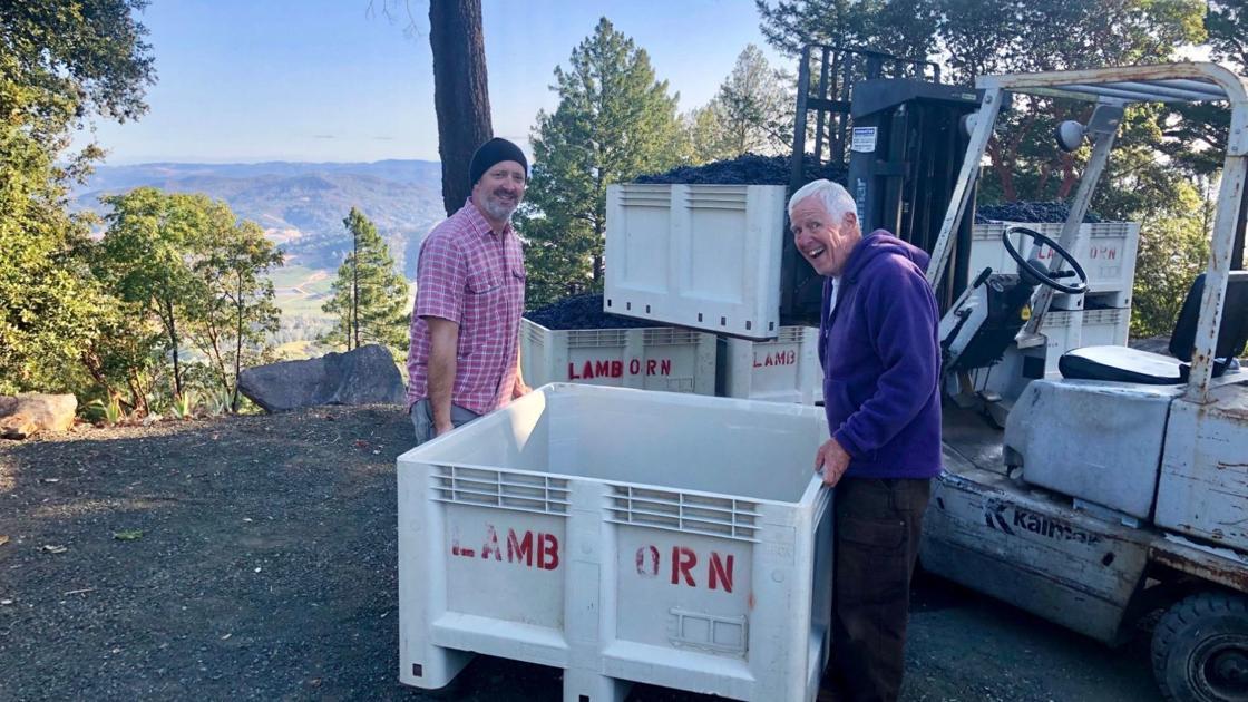 Napa Valley Harvest Report: The Big Push photo