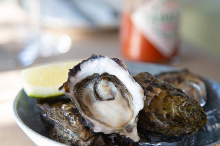 Half price oysters photo