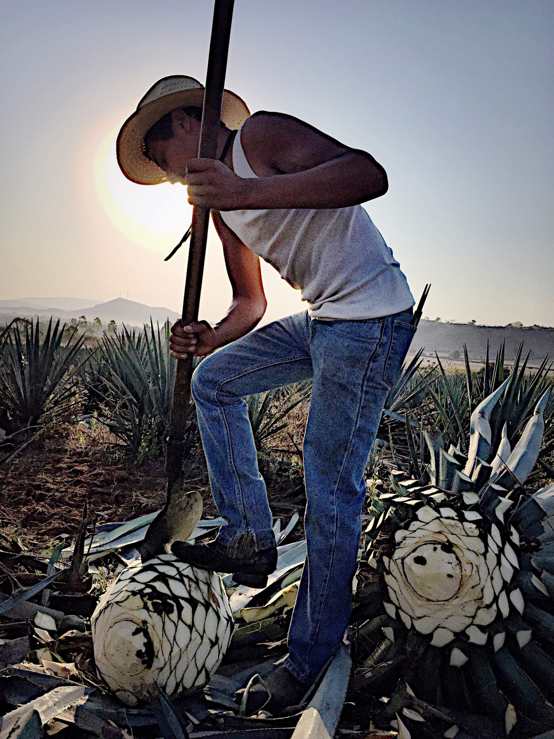 Is Your Tequila Jeopardizing Mexico? photo