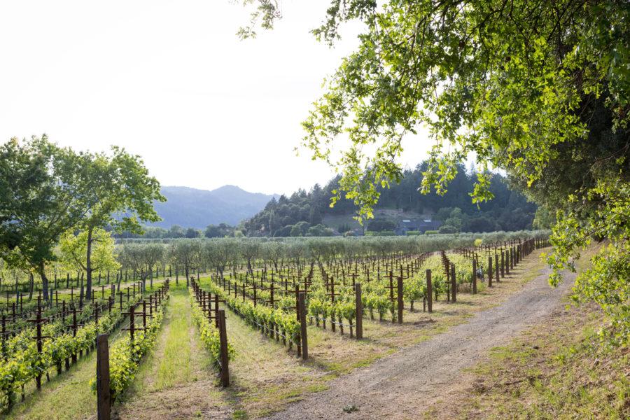 Fall Wine Tasting: Enjoy Fine Wine And Beautiful Fall Foliage photo