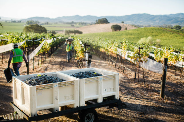 Concentrated Flavors Emerge From 2019 Napa Valley Harvest: Precision Farming And Ideal Conditions photo
