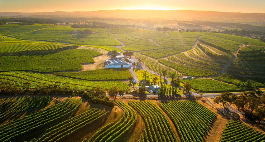 Rosemount Estate Claims Royal Adelaide Wine Show Crown photo