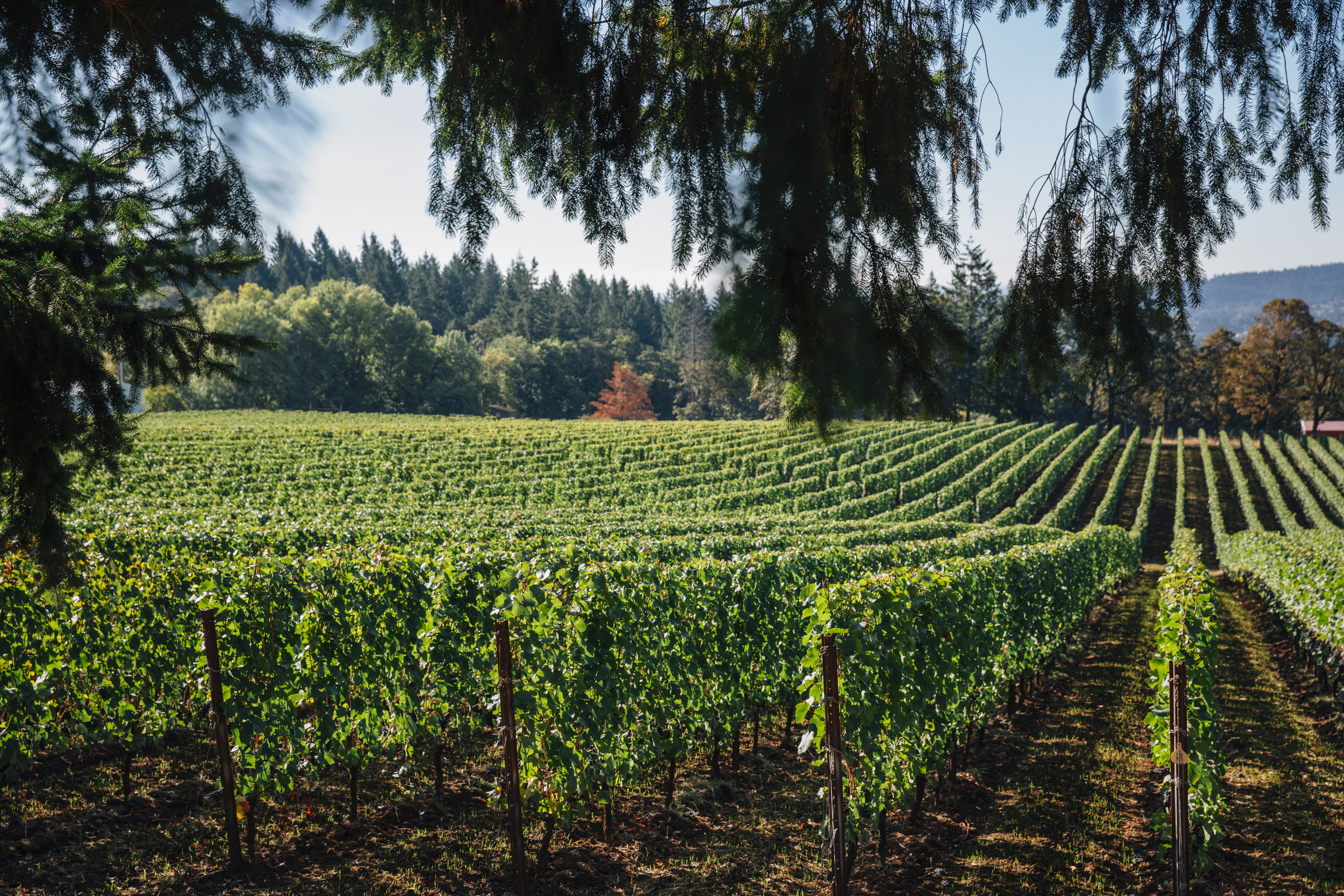 The Willamette Valley Continues To Dazzle With Must-sip Chardonnay photo