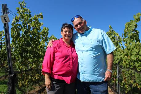 Yarmouth County Vineyard Owners Harvest Fruits Of Their Labour photo