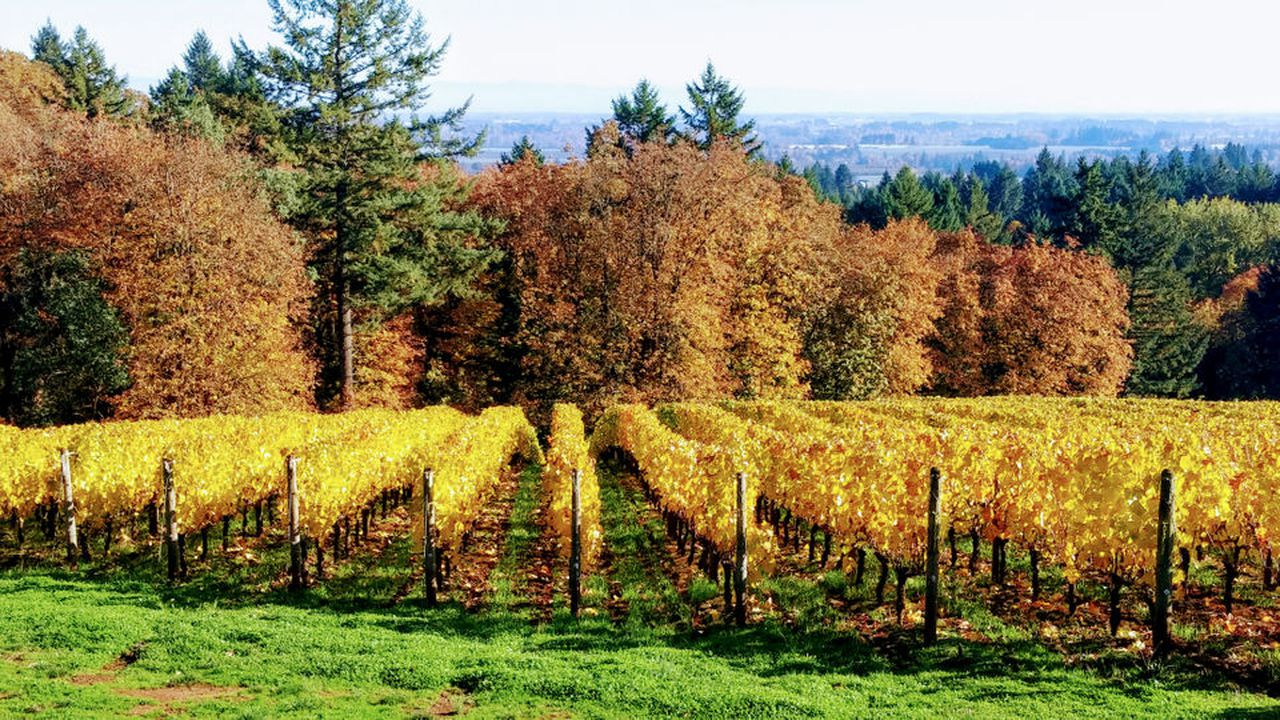 10 November Oregon Wine And Cider Events To Celebrate Autumn photo