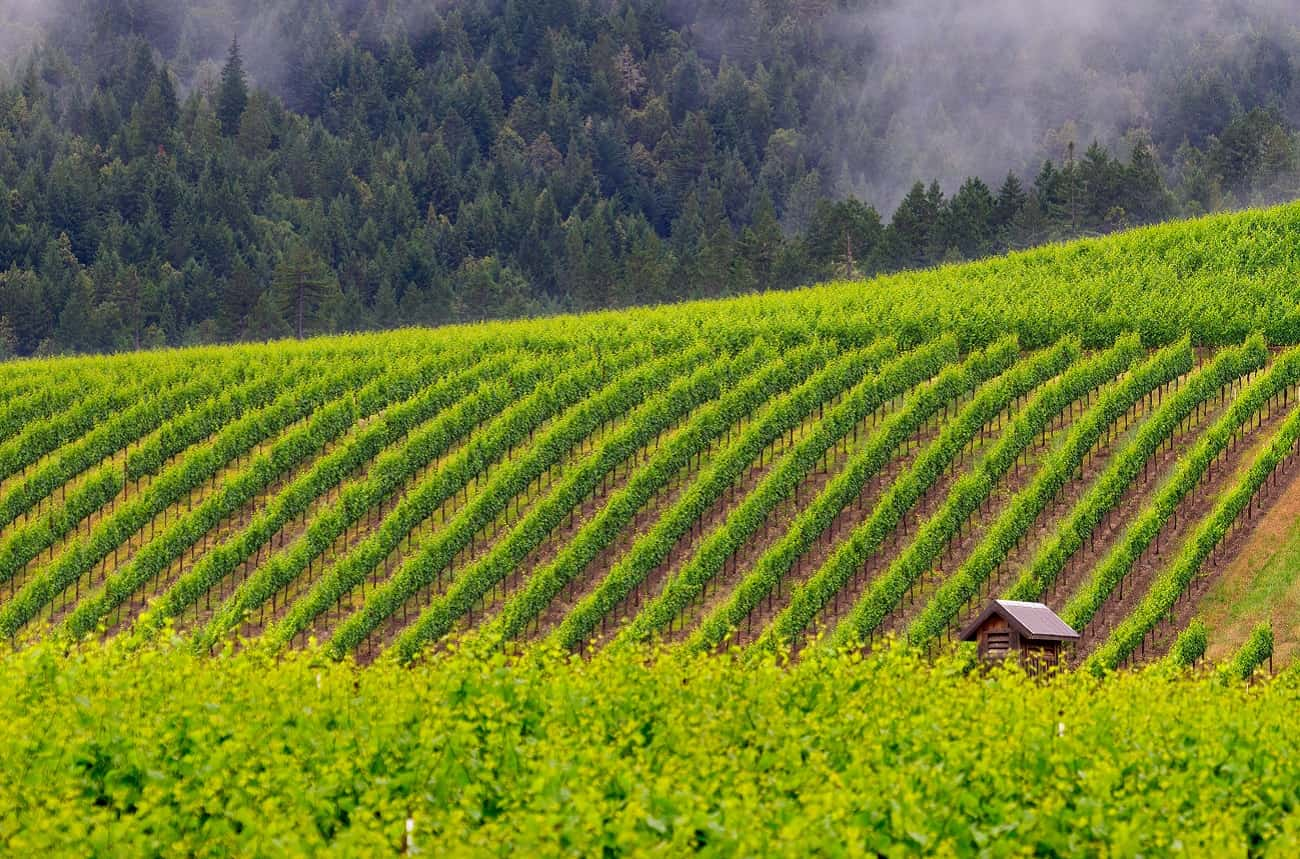 Jackson Family Wines Buys Balo Winery In Anderson Valley photo