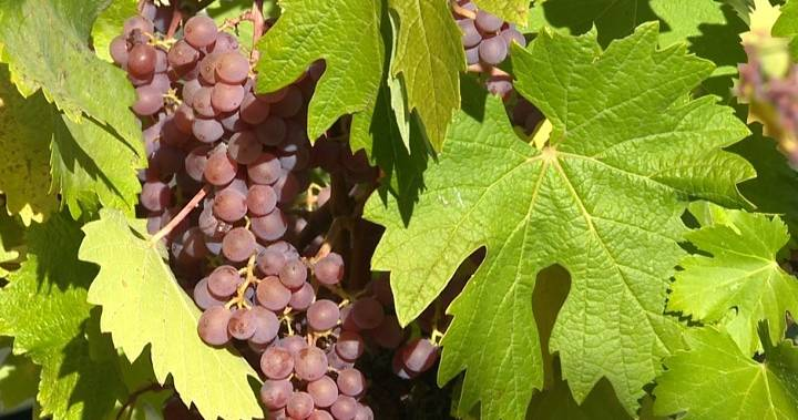 Small Okanagan Winery?s 2017 Syrah Wins 2019 B.c. Wine Of The Year photo