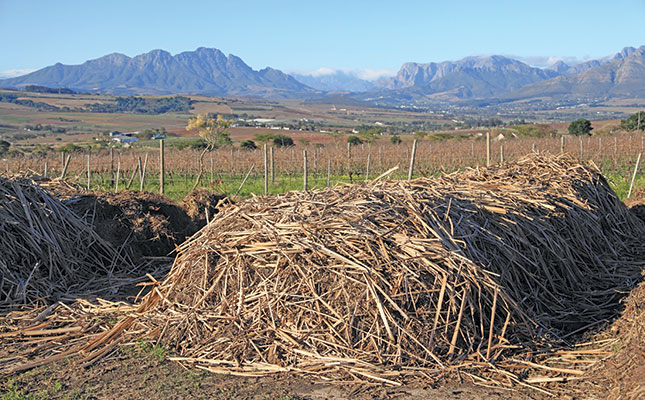 Organic Winemaking: Where Nature Sets The Pace photo