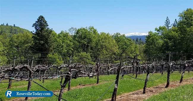 El Dorado Wineries Harvest And Fall Fun photo