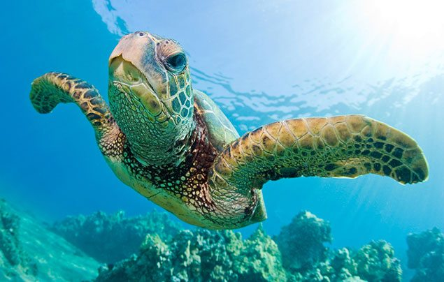 green sea turtle facts 4 Spirits and Wine Brands That Are Protecting Endangered Species Across the World