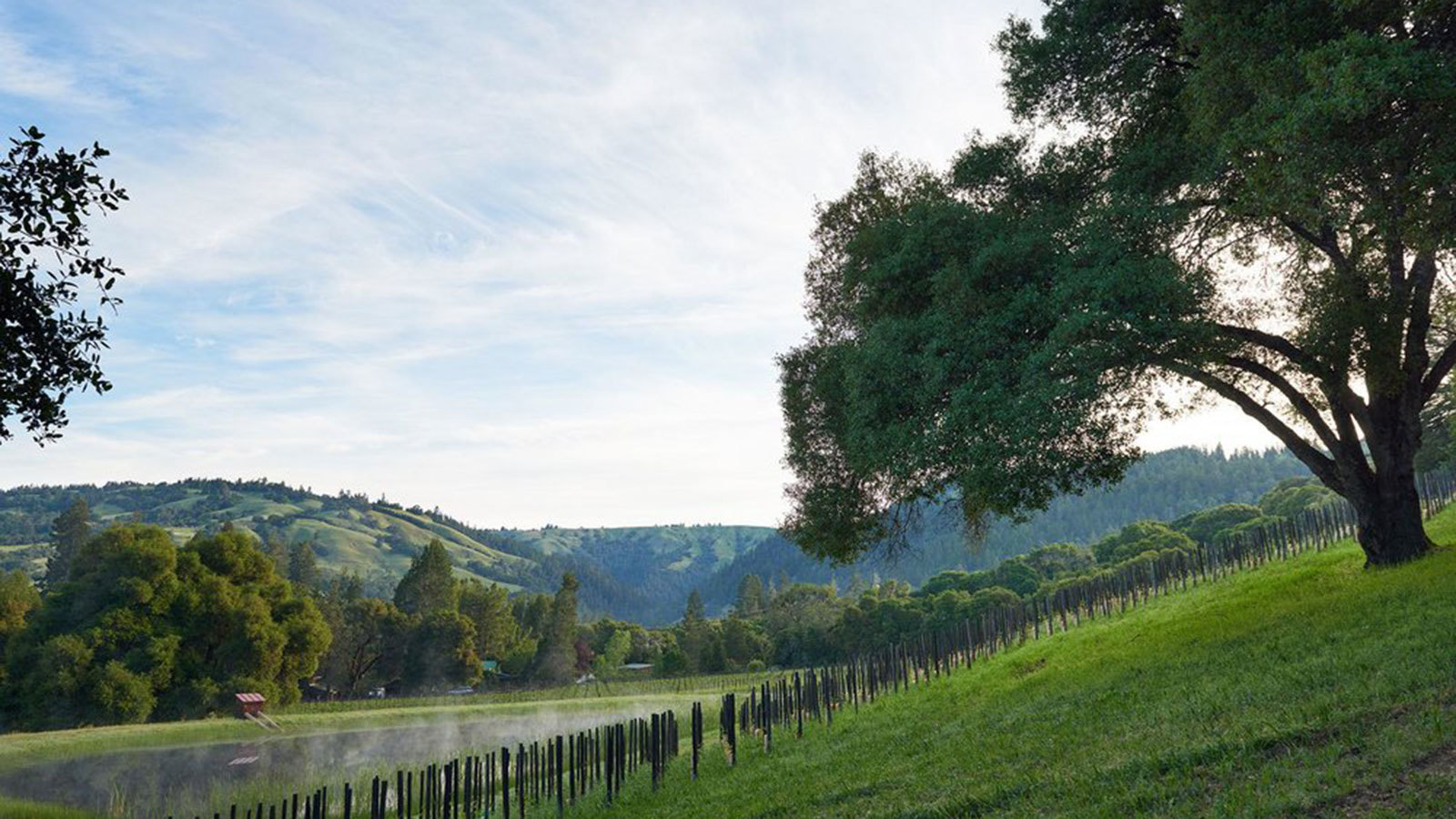 Jackson Family Wines Buys Balo Vineyards In Anderson Valley photo