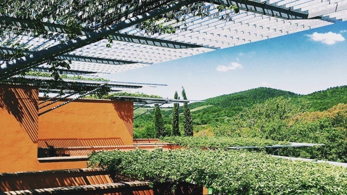 5 Vineyard Experiences That Go Beyond Your Typical Tasting photo