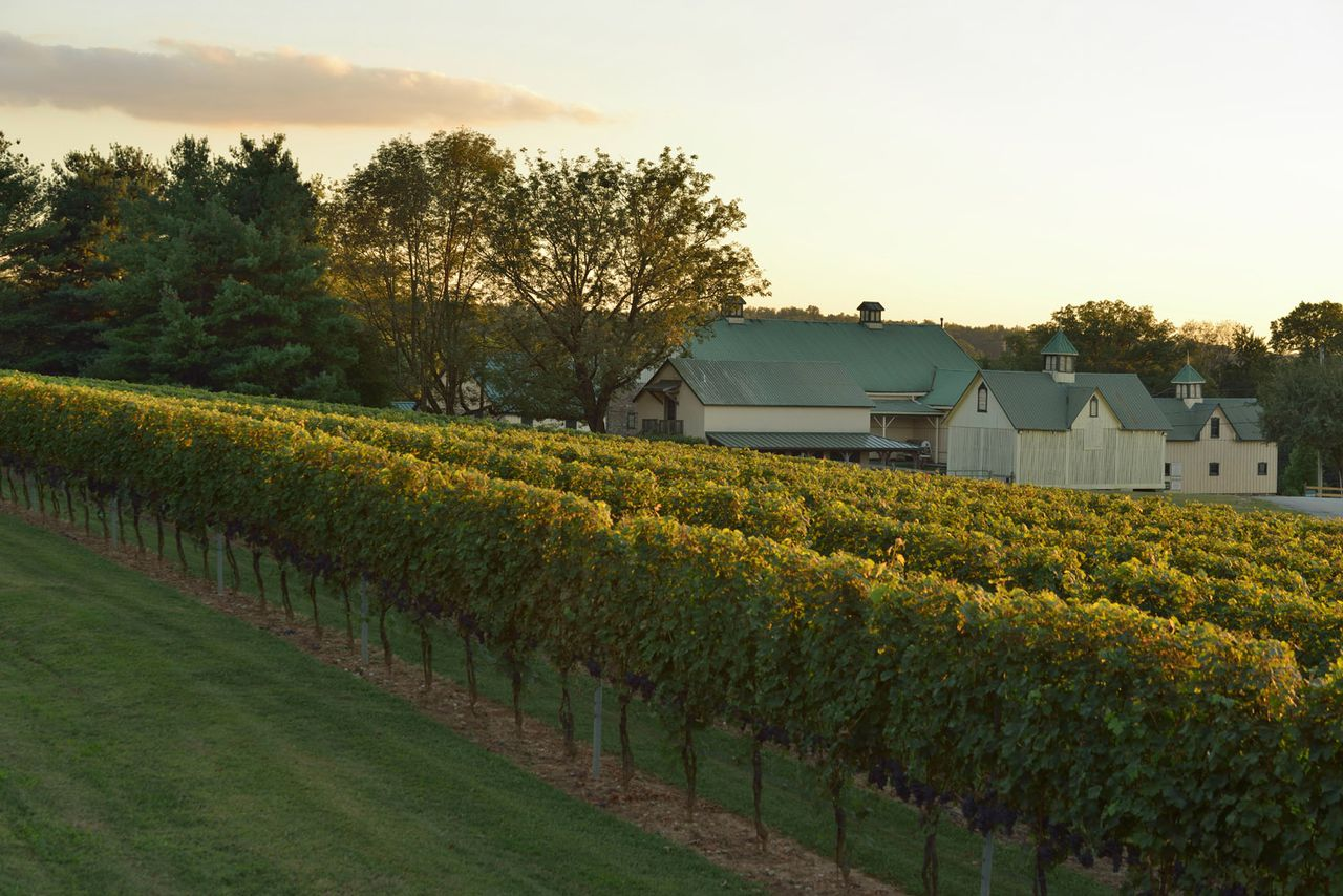 Maryland Winery Eager To Bottle ?one Of The Best Vintages Of The Past Decade? photo