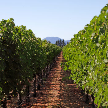 Vineyard House Seeks Injunction Over Constellation Brands? To Kalon Labeled Wines photo