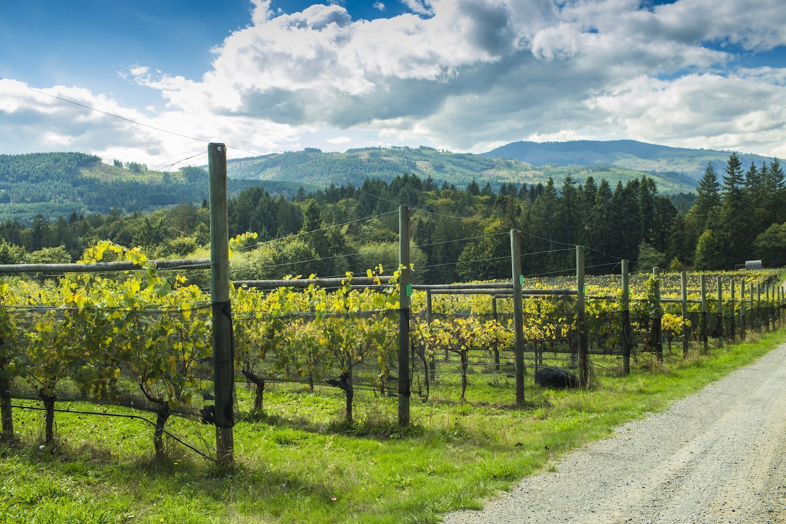 Blue Grouse Estate Winery Announces Delicious Holiday Season Weekends photo