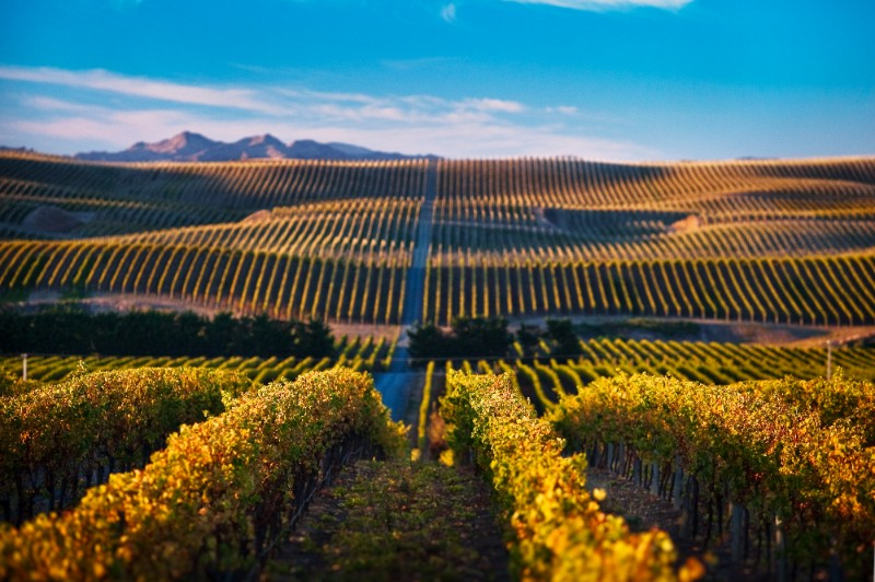Marlborough.Yealands.Estate.Wines8 1 Diemersdal Estate Releases Sauvignon Blanc from Other Side of the World