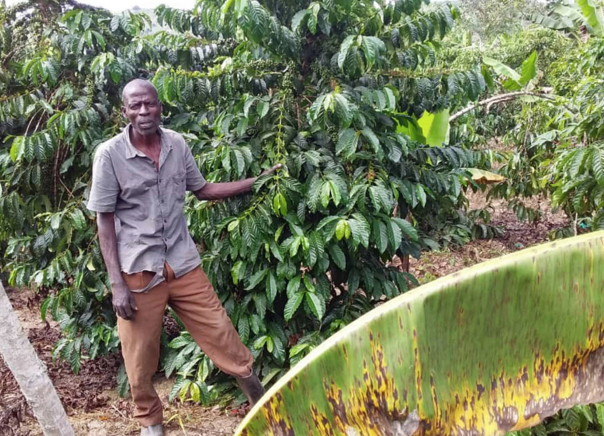 Uganda coffee What Everyone Should Know About Coffee