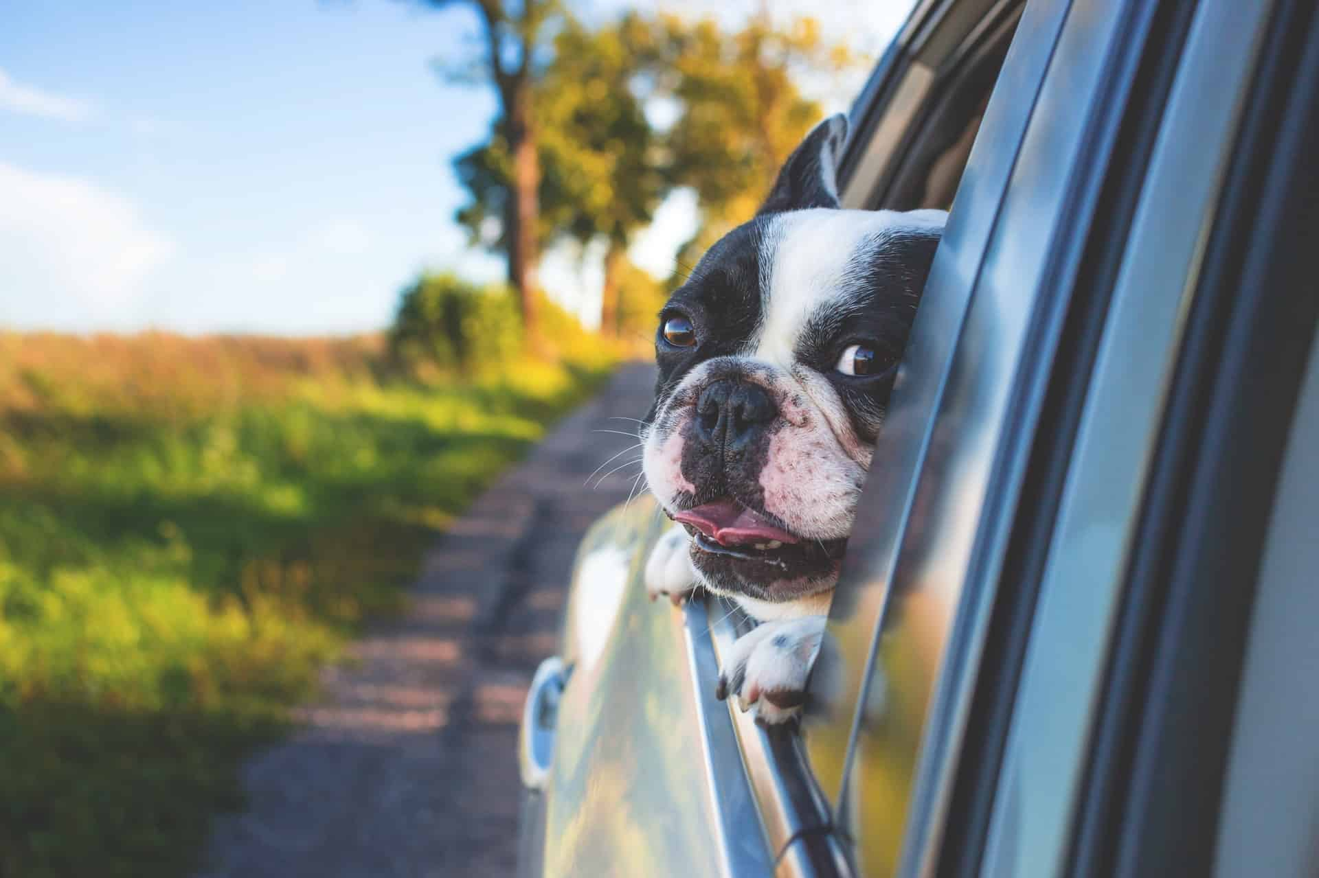 Pet-friendly Stays In South Africa: A Holiday For The Whole Family photo