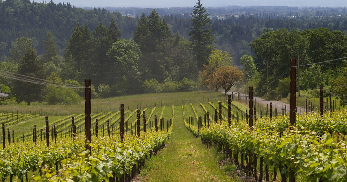A Simple Guide To Pinot Noir photo