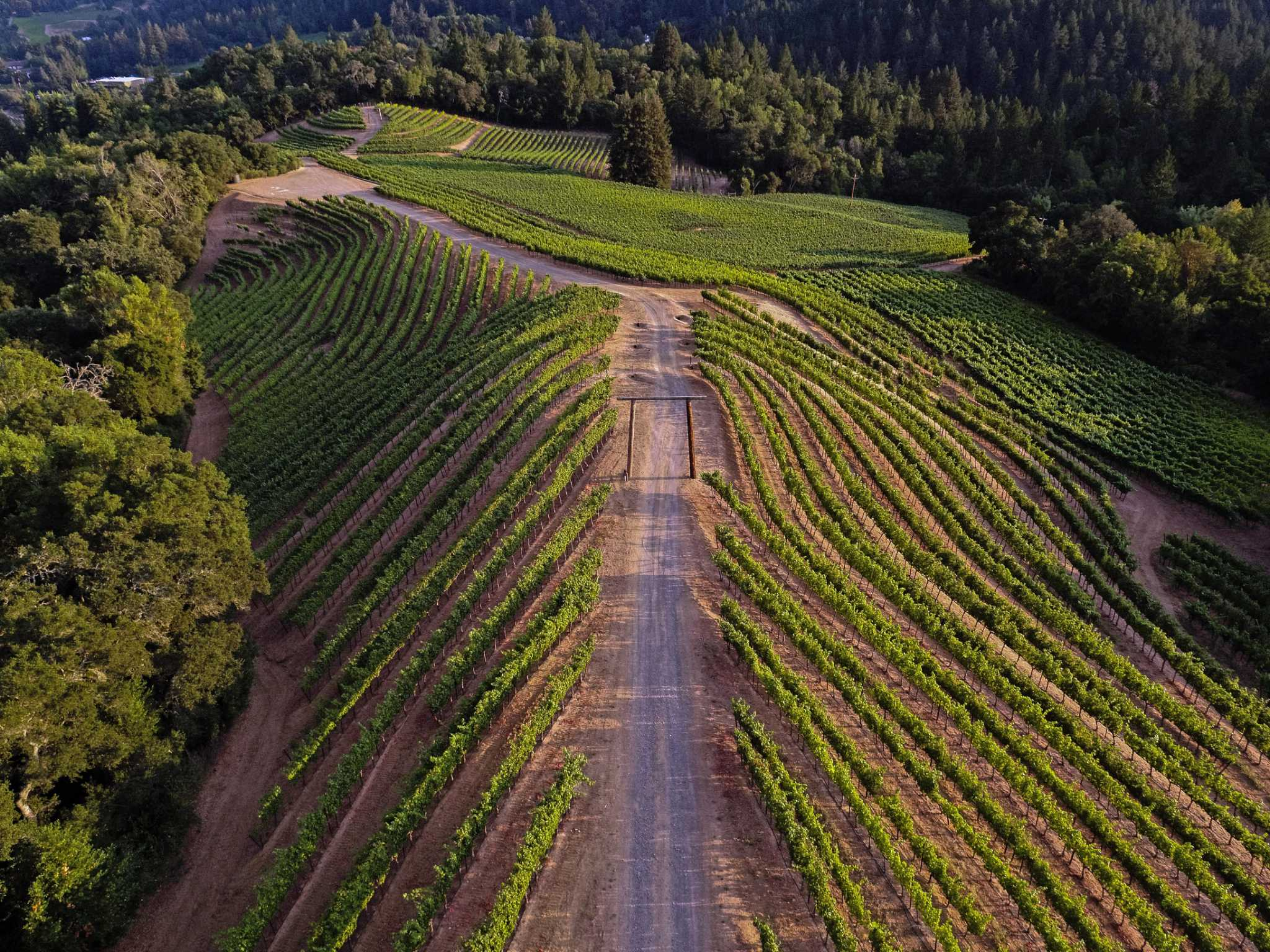 Not Bread Alone: Great Wines From Newton's Mountain Vineyards photo
