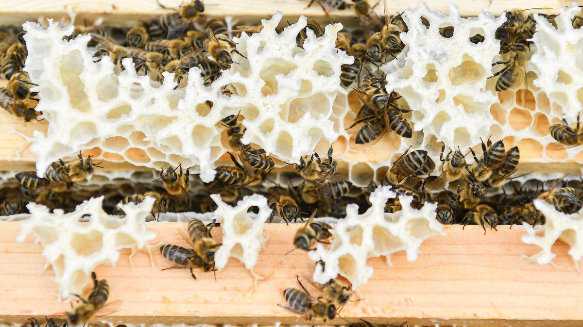 An Arizona Man Registered An Actual Beehive As A Service Animal photo
