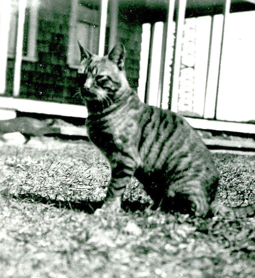 Shore Lore: Washashore Cats Of Cape Cod photo