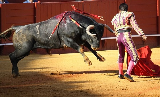 Why Is Pernod Ricard, Owner Of Absolut Vodka, Supporting Bullfighting? photo